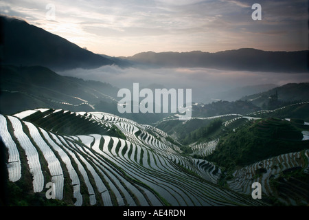 Sunrise in June, Longsheng terraced ricefields, Guangxi Province, China, Asia - Stockfoto
