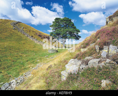 Sycamore Gap, Hadrian's Wall National Trail, Northumberland UK - Stock Photo
