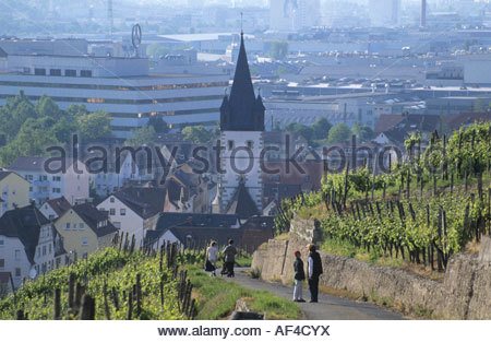 mountain slope germany esslingen europe useful plants vinifera stock photo royalty free. Black Bedroom Furniture Sets. Home Design Ideas