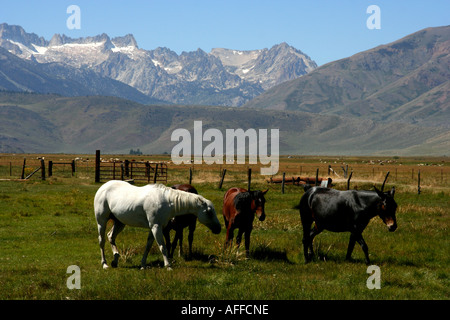 Horses in the Sierras - Stock Photo