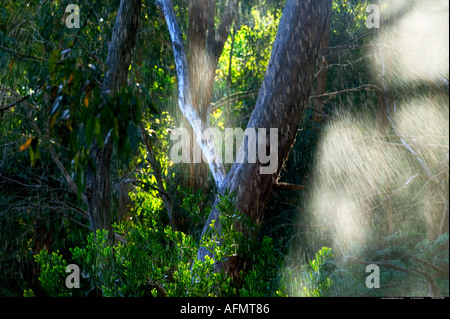 Warrawong Earth Sanctuary Australia - Stock Photo