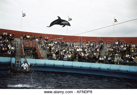 tourism, USA, Marineland of the Pacific, Palos Verdes, Los Angeles, California, dophin show, 1961, 20th century, - Stock Photo