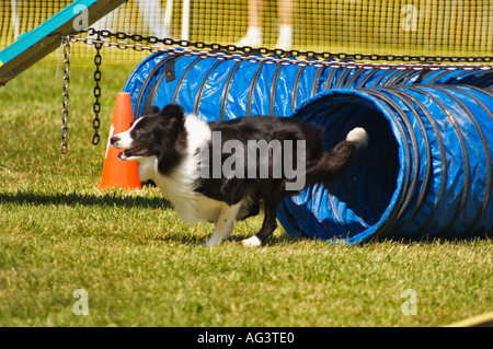 how to build an agility track for border collies
