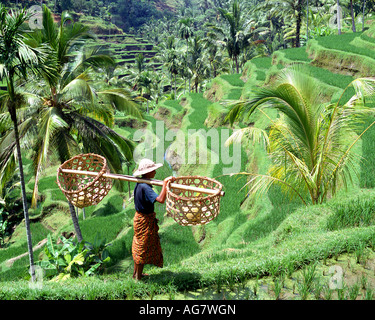 ubud mature singles The six guys you'll date in bali  (ubud or sanur) and sit next to a single traveler  unless there is another mature woman who comes along offering him a .