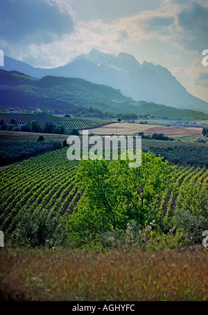 The Gran Sasso mountains overlook the vines of these farms near Penne in the Abruzzo region of Italy - Stock Photo