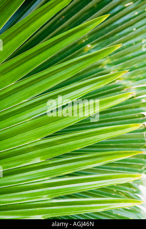 Close-up of palm leaves - Stock Photo