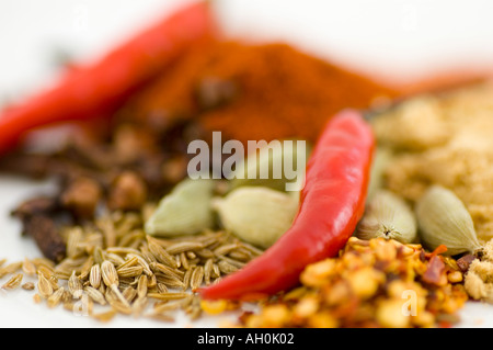 A selection of spices and red chilli peppers against a white background - Stockfoto