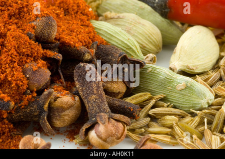 A selection of spices against a white background - Stockfoto