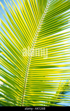 Close up of tropical green leaf - Stockfoto