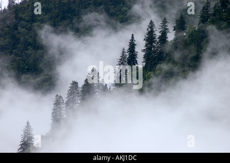 Mist rises from the forest during the summer monsoon Kham eastern Tibet Sichuan Province China - Stock Photo