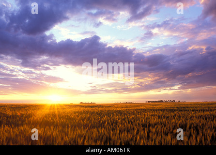 Sunset over a Wheat field in the Red River Valley of North Dakota - Stock Photo