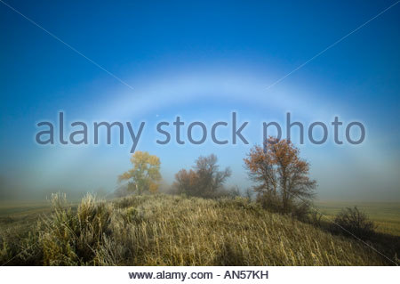 A bright fogbow frames several tress growing on a bluff high above the Missouri River between Poplar and Brockton, - Stock Photo