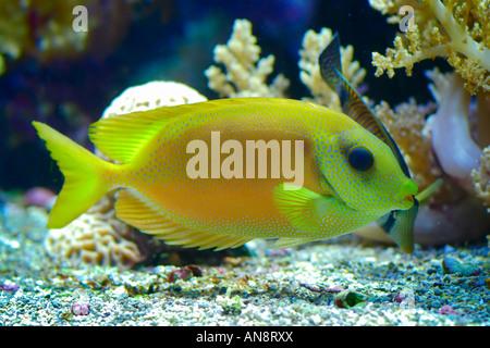Exotic fish in an aquarium - Stock Photo