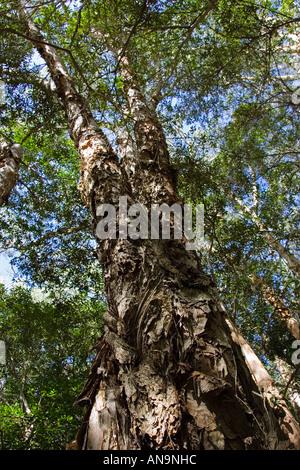 Daintree Rainforest Natural Resources