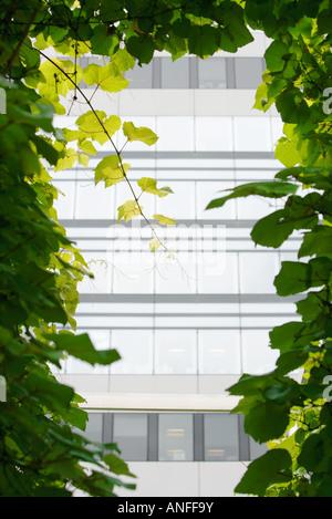 Office building seen through vines - Stock Photo