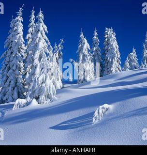 Fresh snow on Mount Elphinstone, British Columbia, Canada. - Stock Photo
