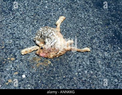 Roadkill, North Island, New Zealand - Stock Photo