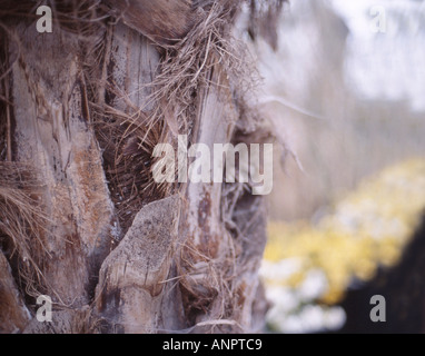 palm and daffodils - Stock Photo