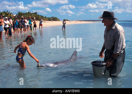 Australia, Western Australia, Shark Bay, Monkey Mia, Dolphin feeding - Stock Photo