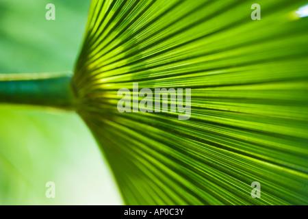 Palm leaf in detail - Stockfoto