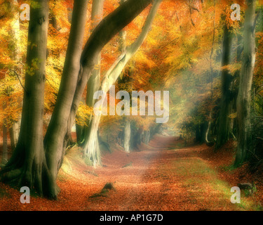 GB - HERTFORDSHIRE: Autumn in Ashridge Park - Stock Photo