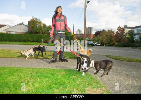 http://n450v.alamy.com/450v/apeg9y/asian-woman-on-rollerblades-walking-dogs-apeg9y.jpg