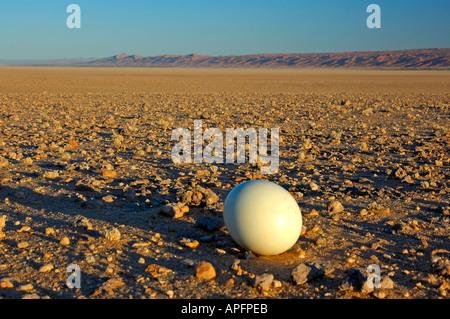 Ostrich egg lain on the gravel plains of the Namib Desert Namibia - Stock Photo