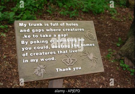 Sherwood Forest Nottingham England GB UK 2006 - Stock Photo