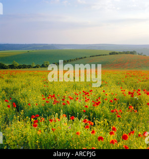 Poppies on the South Downs, Sussex, England - Stock Photo
