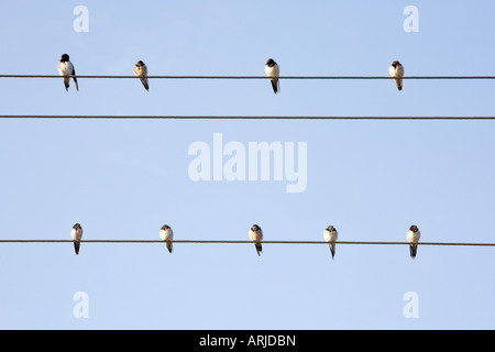 Young swallows sitting on electricity ower lines in the indian countryside. India - Stock Photo