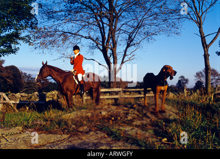 The fox hunt - Stock Photo