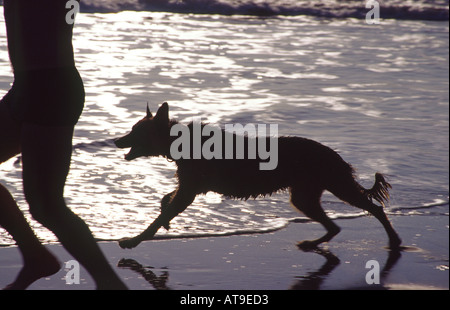 man and dog running on the beach - Stock Photo