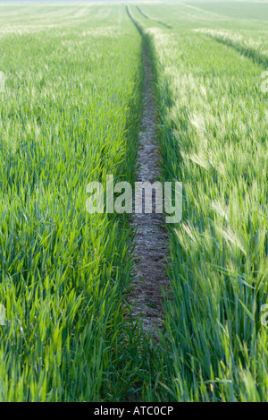 Tire tracks in field of grass - Stock Photo