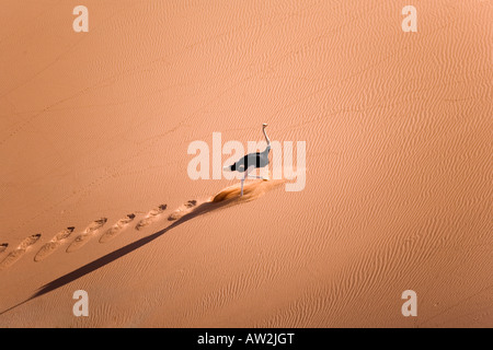 Ostrich running on dunes - Stock Photo