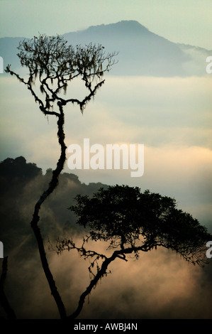 Misty landscapes at dawn in the Pirre mountains in the Darien national park , Darien province, Republic of Panama. - Stock Photo