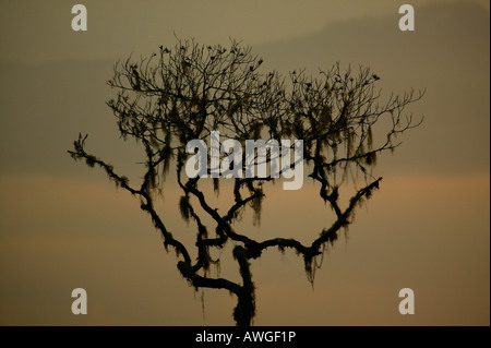 Tree and misty landscapes at Cerro Pirre in Darien national park, Darien province, Republic of Panama. - Stock Photo