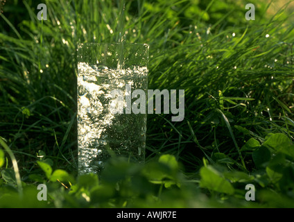 Glass of water in grass - Stock Photo