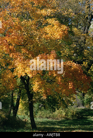 Sweden, trees with autumn foliage - Stock Photo