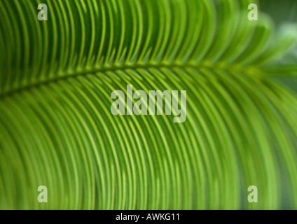 Palm leaf, extreme close-up - Stockfoto