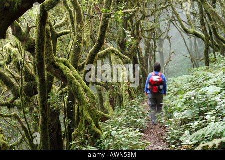 Woman hiking through Garajonay National Park, laurel forest, laurisilva, La Gomera, Canary Islands, Spain - Stock Photo