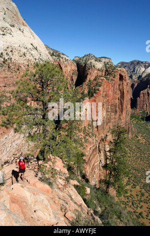Woman hiking on top of Angles Landing, Zion National Park, Utah, USA - Stock Photo