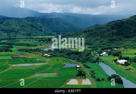 Taro Fields in Hanalei Valley Hanalei Valley Overlook Kauai Hawaii USA August 1996 - Stock Photo