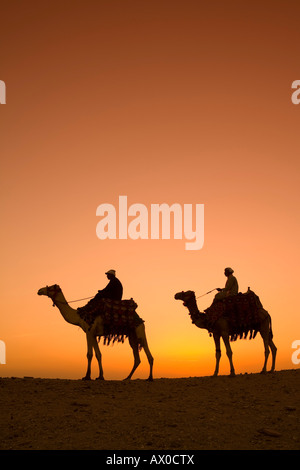Camels near the Pyramids at Giza, Cairo, Egypt - Stock Photo