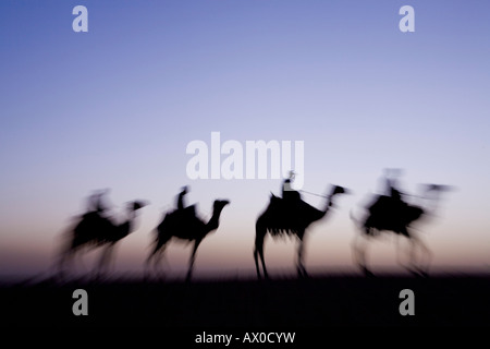 Camels near the Pyramids at Giza, Cairo, Egypt - Stock Photo