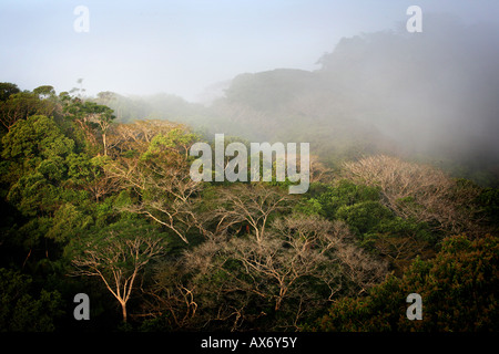 Misty rainforest in Soberania national park Republic of Panama - Stock Photo