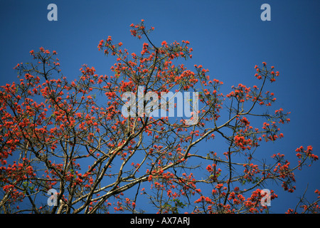 Colorful flowers on tree in the Darien national park Republic of Panama - Stock Photo