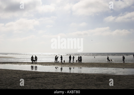 Friends gather on beach to let their pets run freely - Stock Photo