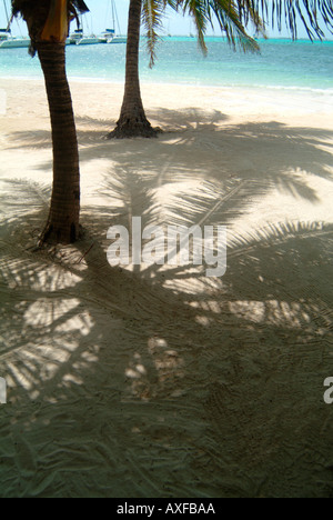 Palm trees on a sandy tropical beach with turquoise waters. Teh high sun is casting shadows of the trees fronds - Stock Photo
