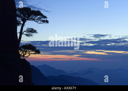 Silhouette of pine tree, White Cloud scenic area, Huang Shan (Mount Huangshan) (Yellow Mountain), Anhui Province, - Stock Photo