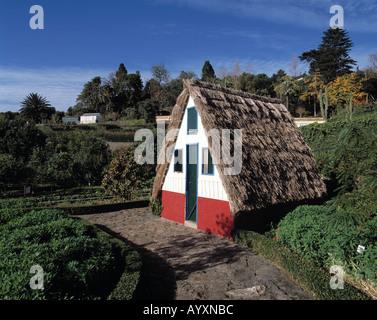 Reisen europa portugal madeira parkanlage am hafen von for Haus in madeira